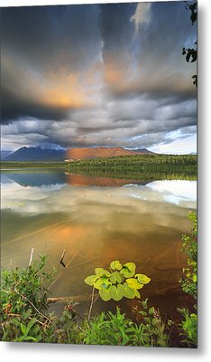 Lilly Metal Print by Ed Boudreau