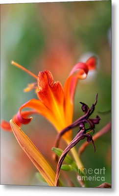 Lilly Flowers Metal Print by Nailia Schwarz