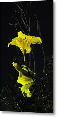 Lilly In The Evening Metal Print