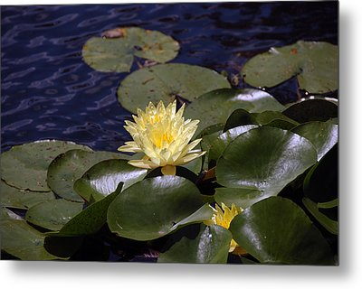 Lilly Metal Print by Kelvin Booker