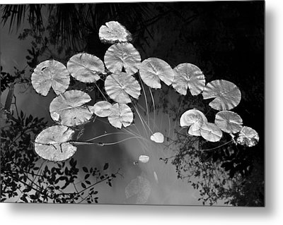 Lilly Pads Fakahtchee Strand Metal Print by Jim Dohms