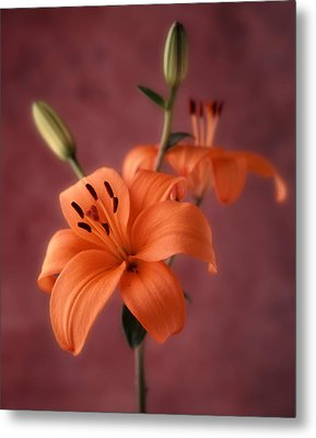 Lily 1 Metal Print by Joseph Gerges