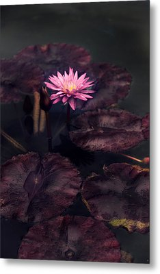 Moonlight Lily Metal Print by Jessica Jenney
