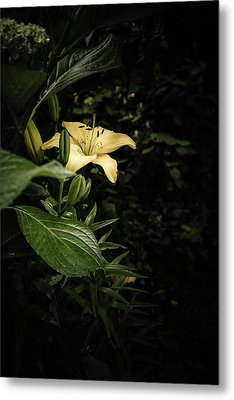 Metal Print featuring the photograph Lily In The Garden Of Shadows by Marco Oliveira
