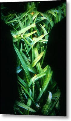 Lily Leaves Metal Print