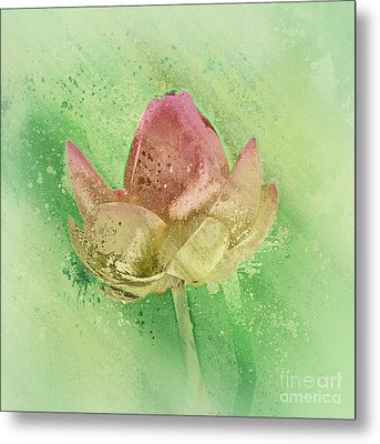 Lily My Lovely - S112sqc88 Metal Print