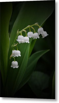 Lily Of The Valley 2 Metal Print