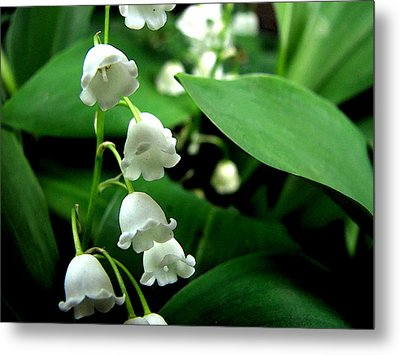 Lily Of The Valley  Metal Print by Michelle Calkins