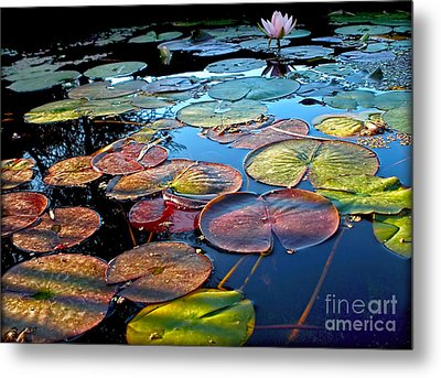 Lily Pads At Sunset Metal Print by Kaye Menner