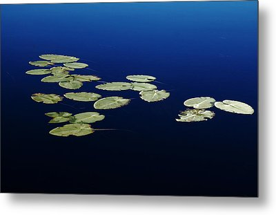 Lily Pads Floating On River Metal Print by Debbie Oppermann