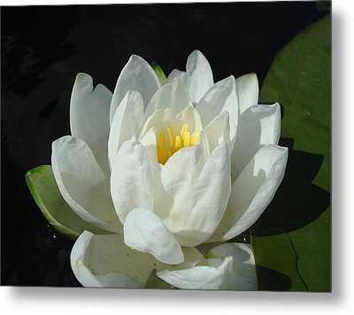 Metal Print featuring the photograph Lily Pond by Christie Minalga