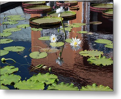 Lily Pond Reflections Metal Print by Suzanne Gaff