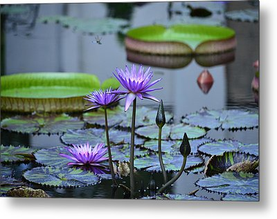 Lily Pond Wonders Metal Print by Maria Urso
