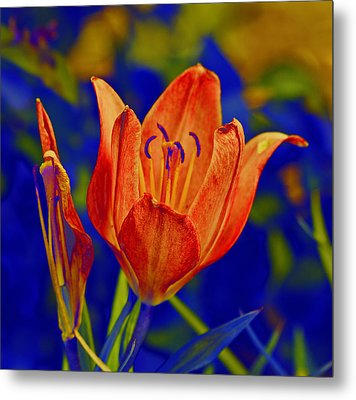 Metal Print featuring the photograph Lily With Sabattier by Bill Barber