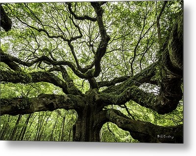 Limbs Of Days Metal Print by Bill Cantey
