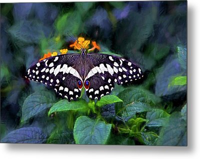 Metal Print featuring the photograph Lime Swallow Tail by James Steele