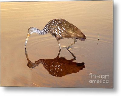 Limpkin In The Mirror Metal Print by David Lee Thompson