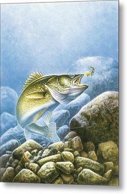Lindy Walleye Metal Print by JQ Licensing