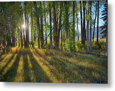 Metal Print featuring the photograph Lines by Mary Hone