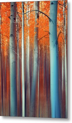 Lines Of Autumn Metal Print