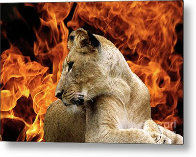 Lion And Fire Metal Print by Inspirational Photo Creations Audrey Woods