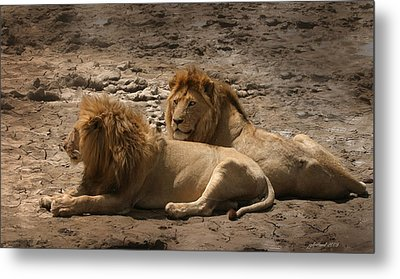 Lion Brothers Metal Print by Joseph G Holland