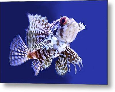 Lion Fish Metal Print by Art Spectrum