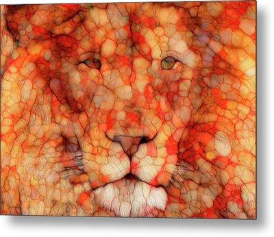 Lion  Metal Print by Jack Zulli