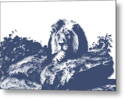 Lion3 Metal Print by Joe Hamilton