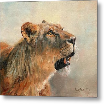 Metal Print featuring the painting Lioness Portrait 2 by David Stribbling