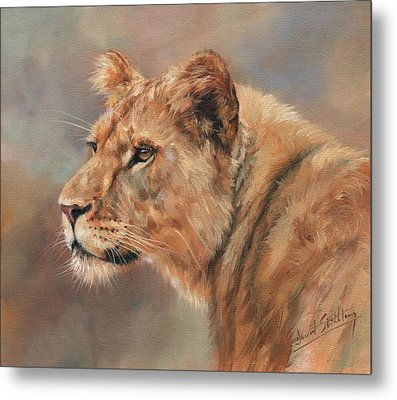 Metal Print featuring the painting Lioness Portrait by David Stribbling