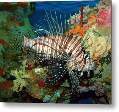 Metal Print featuring the photograph Lionfish by Kathleen Stephens