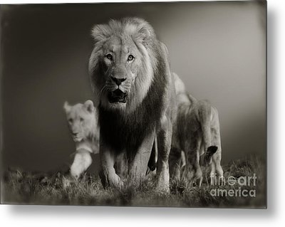 Metal Print featuring the photograph Lions On Their Way by Christine Sponchia