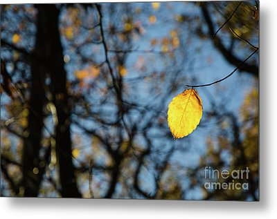 Metal Print featuring the photograph Lit Lone Leaf by Kennerth and Birgitta Kullman
