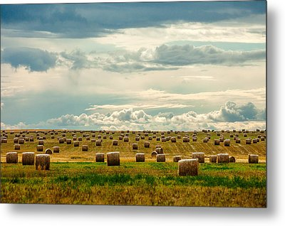 Littered With Bales Metal Print