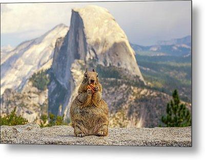 Little, Big Squirrel Metal Print by Joseph S Giacalone