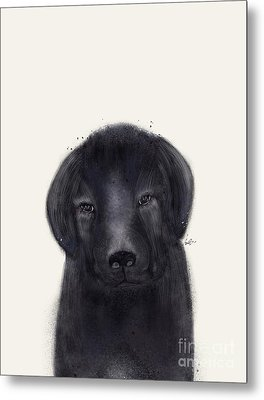 Metal Print featuring the painting Little Black Labrador by Bri B