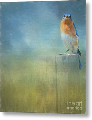 Little Bluebird Metal Print by Kathleen Rinker