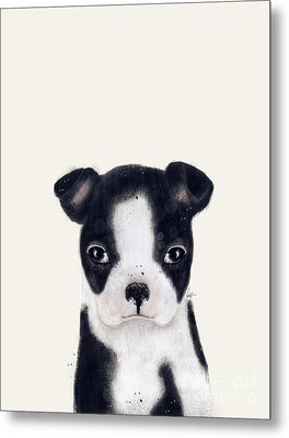 Metal Print featuring the painting Little Boston Terrier by Bri B