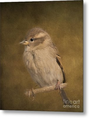 Little Cutie Metal Print by Kathleen Rinker