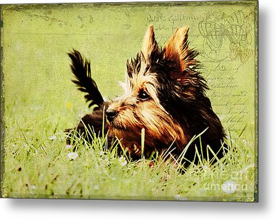 Little Dog Metal Print by Angela Doelling AD DESIGN Photo and PhotoArt