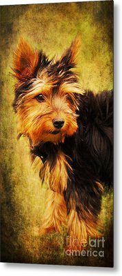 Little Dog II Metal Print by Angela Doelling AD DESIGN Photo and PhotoArt