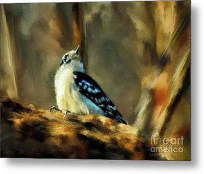 Little Downy Woodpecker In The Woods Metal Print by Lois Bryan