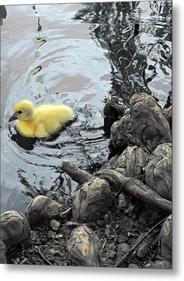 Little Ducky 2 Metal Print by Angelina Vick