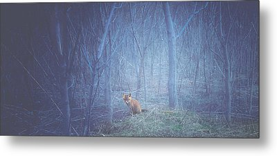 Little Fox In The Woods Metal Print by Carrie Ann Grippo-Pike