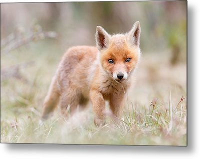 Little Fox Kit, Big World Metal Print by Roeselien Raimond
