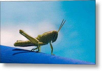 Little Grasshopper Metal Print by Christopher Holmes