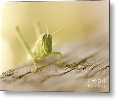 Little Grasshopper Metal Print by Claudia Ellis