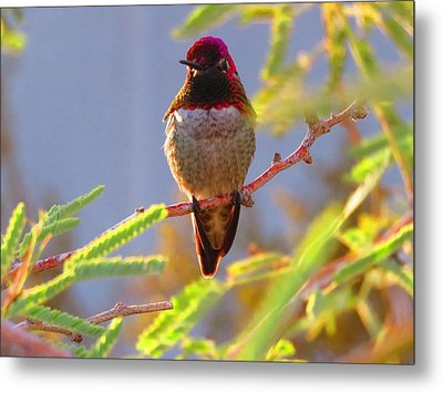 Little Jewel With Wings Fourth Version Metal Print
