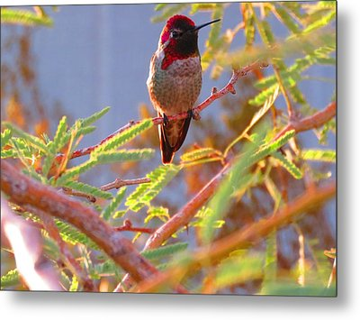 Little Jewel With Wings Metal Print